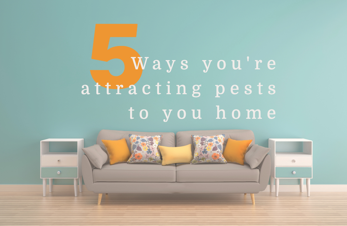 Five ways you are attracting pests to your home