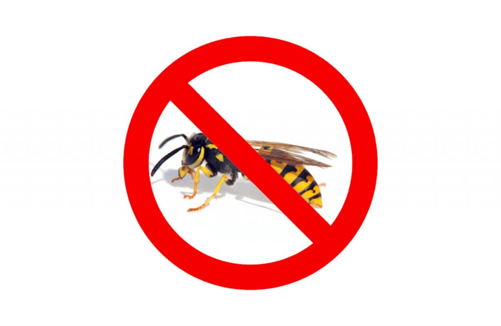 Wasp prevention tips